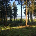 las medytacja śpiew ptaków magdala-joga.pl